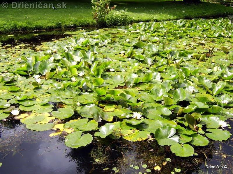 Botanic Gardens Glasnevin Dublin_120