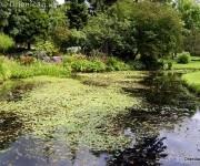 Botanická záhrada Dublin