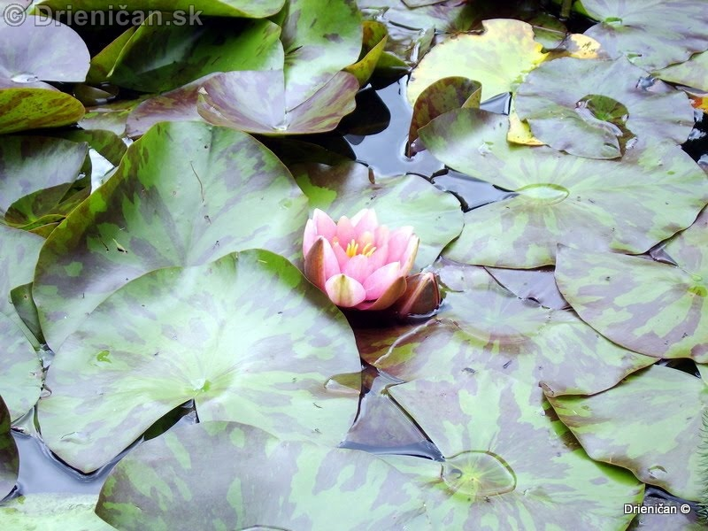 Botanic Gardens Glasnevin Dublin_122
