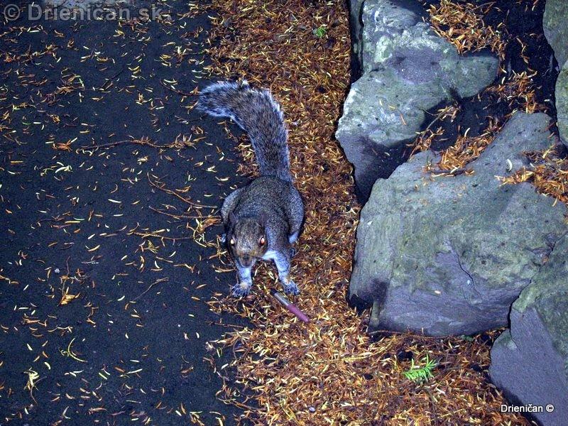 Botanic Gardens Glasnevin Dublin_126