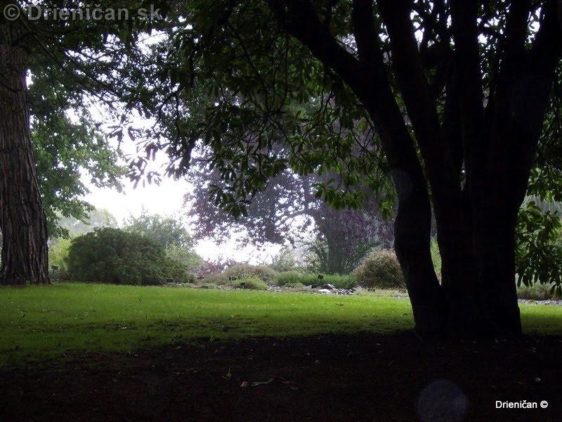 Botanic Gardens Glasnevin Dublin_127