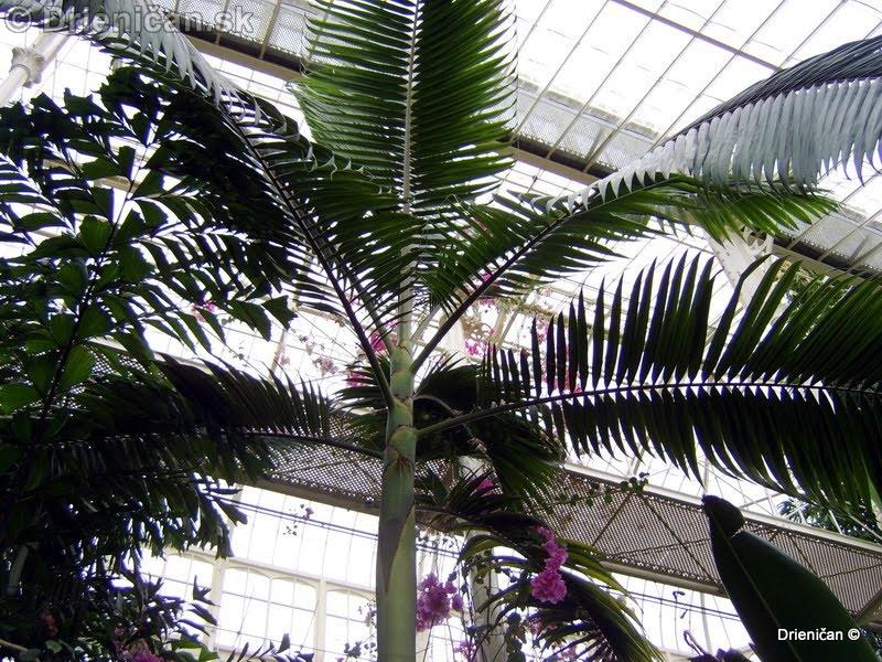 Botanic Gardens Glasnevin Dublin_130