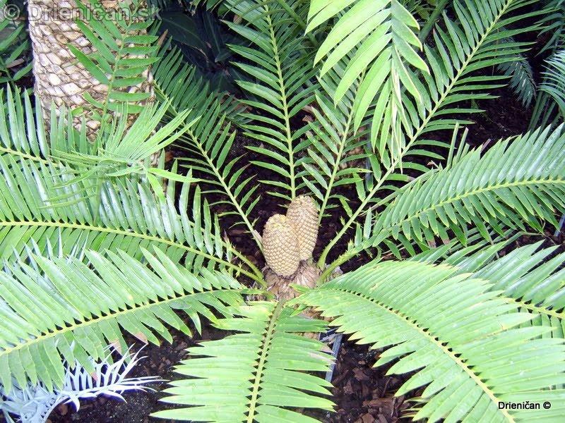 Botanic Gardens Glasnevin Dublin_131