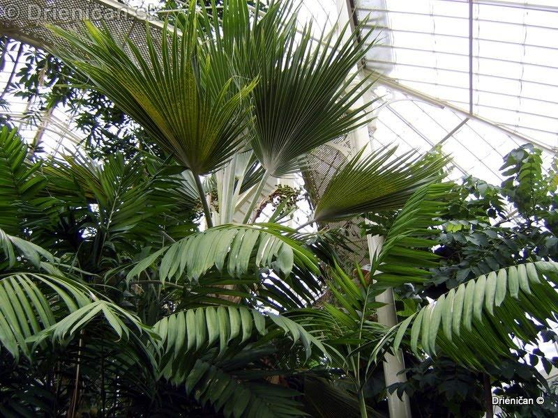Botanic Gardens Glasnevin Dublin_133