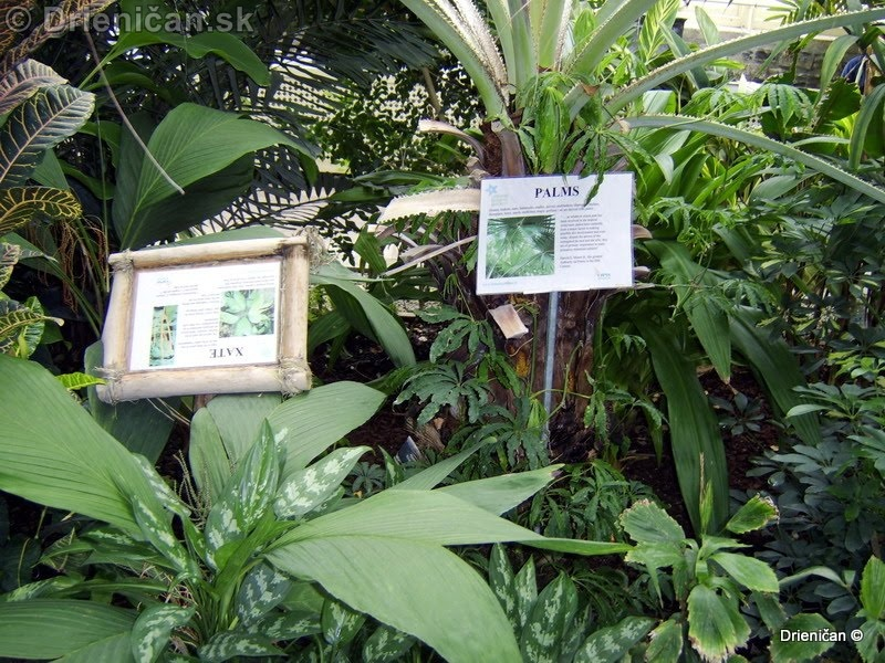 Botanic Gardens Glasnevin Dublin_136