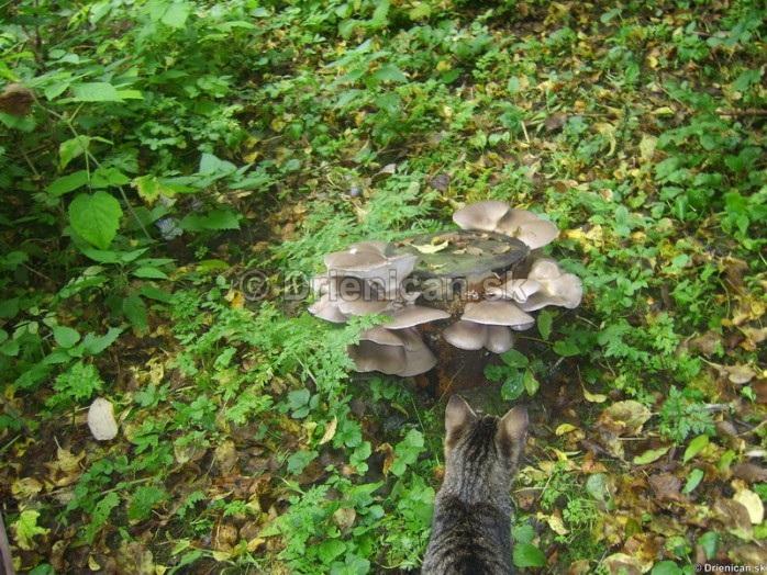 Ako pestovať Hlivu Ustricovú doma