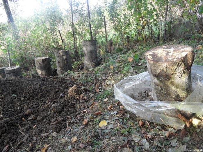 Ako sadiť Hlivu Ustricovú doma