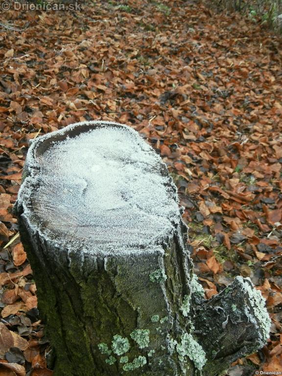 Zima sa hlási na Slovensku