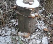 Drienica Lysá, keď mrzne...