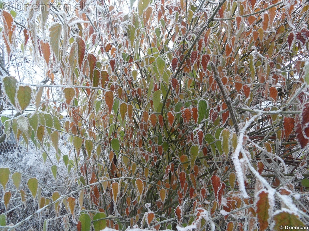 Keď začína mrznúť...2011