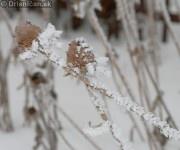 Mraz na Drienici ked mrzne