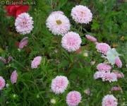 Kvety, leto, rozkvitnutá záhradka, pastva pre oči