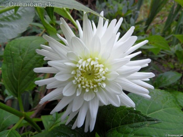 Kvety, leto 2011_22