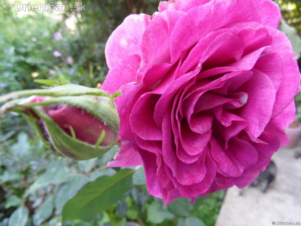 kvety,leto,zahradka,pestovanie,
