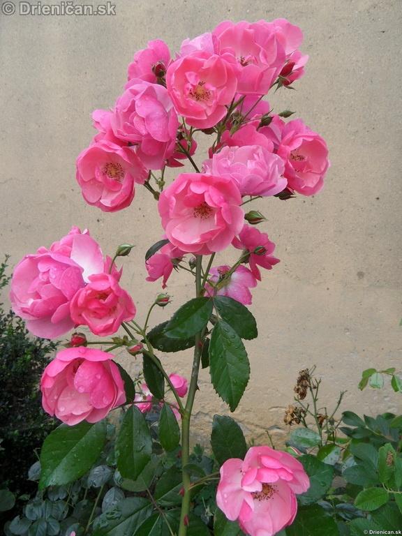 Kvety v záhradke, domácnosť zdobí Vaša záhradka