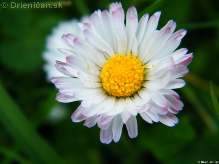 Kvety doma a v záhradke