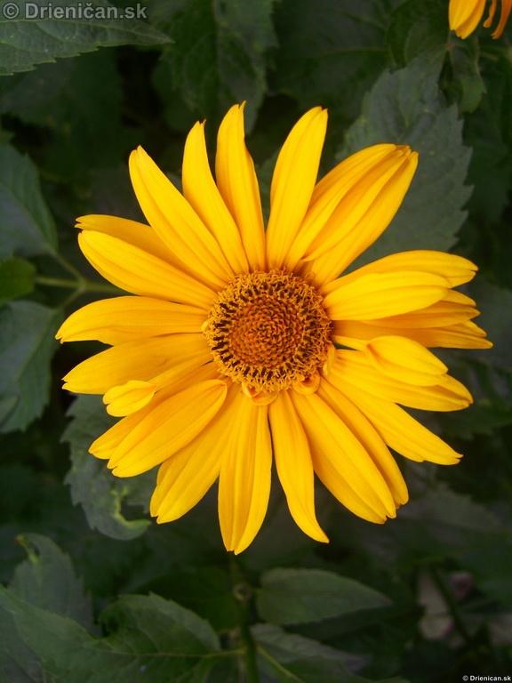 Kvety v záhradke a doma