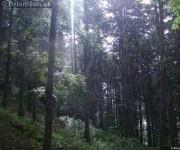 Dážď v lese