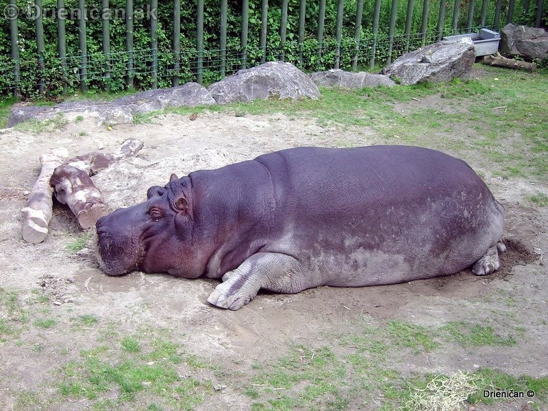 Dublin Zoo Phoenix Park