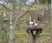 Bocianie hniezdo, Drienica