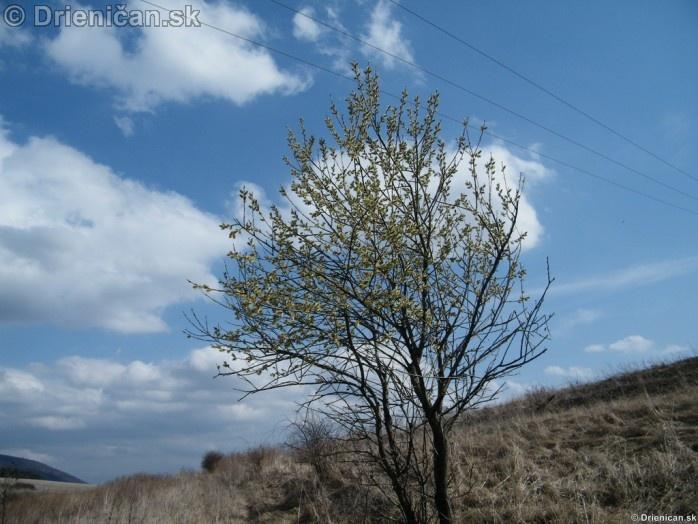 Bahniatka,Bažičky-makro fotografie 2012