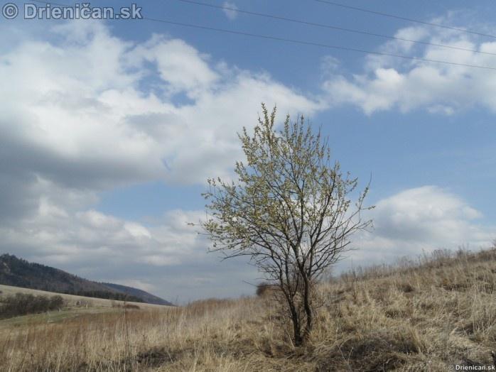 Bahniatka bazicky- makro fotografia_11