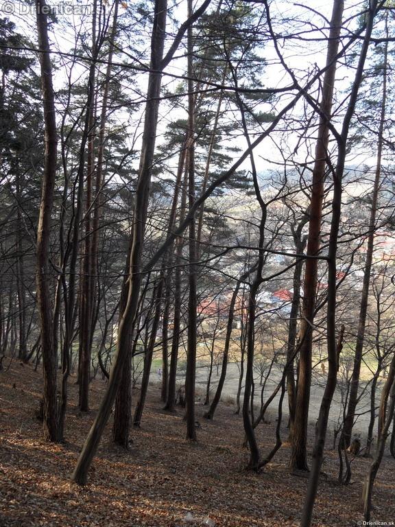 Drienica, zaujimave pohlady, april 2012_07