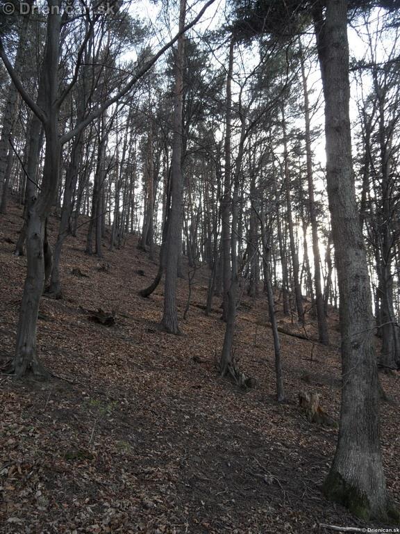Drienica, zaujimave pohlady, april 2012_18