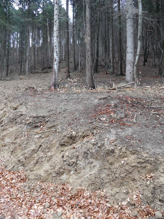 Pretvaranie lesa na obraz ludsky_05
