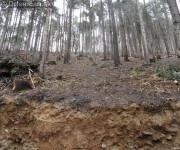 Pretváranie lesa na obraz ľudský