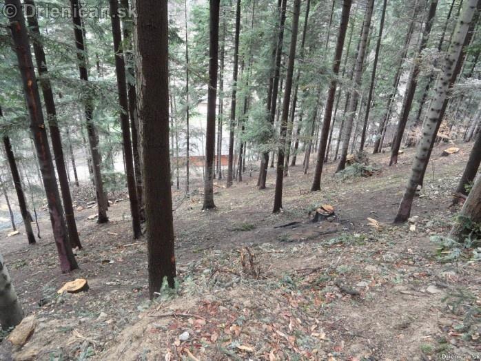 Pretvaranie lesa na obraz ludsky_27