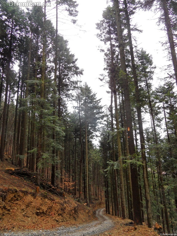 Pretvaranie lesa na obraz ludsky_29