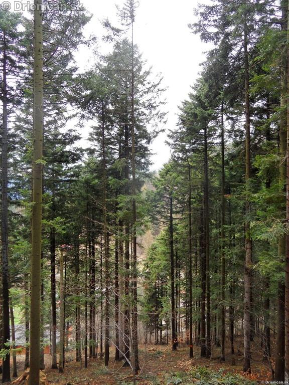 Pretvaranie lesa na obraz ludsky_30