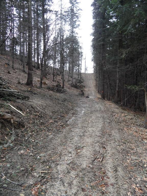 Pretváranie lesa na obraz ľudský…