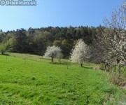 Májové rozkvitnuté čerešne a jablone 2012,Drienica