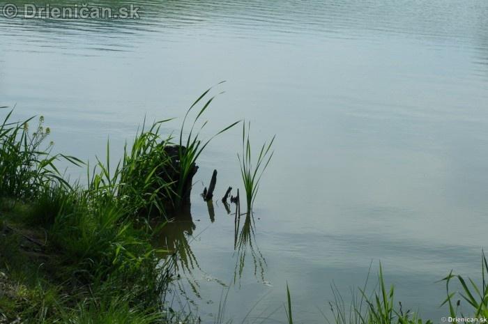 Rybacka v Rozkovanoch 2012_14