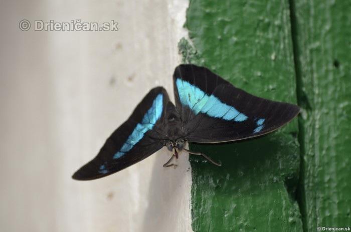 Tropicke motyle v botanickej zahrade Kosice_03