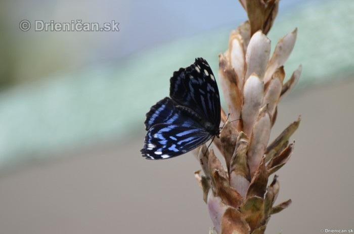 Tropicke motyle v botanickej zahrade Kosice_06