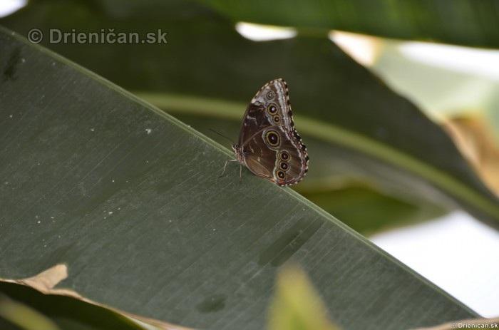 Tropicke motyle v botanickej zahrade Kosice_08