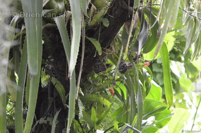 Tropicke motyle v botanickej zahrade Kosice_16
