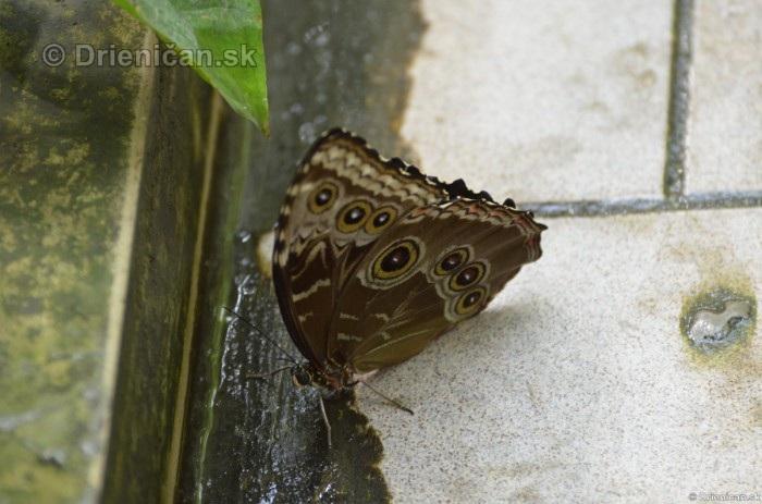 Tropicke motyle v botanickej zahrade Kosice_18