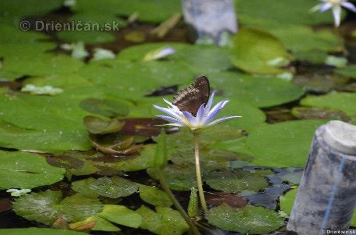 Tropicke motyle v botanickej zahrade Kosice_19