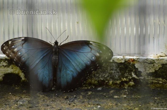 Tropicke motyle v botanickej zahrade Kosice_23