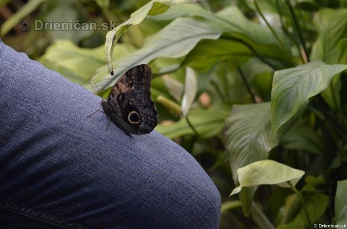 Tropicke motyle v botanickej zahrade Kosice_26