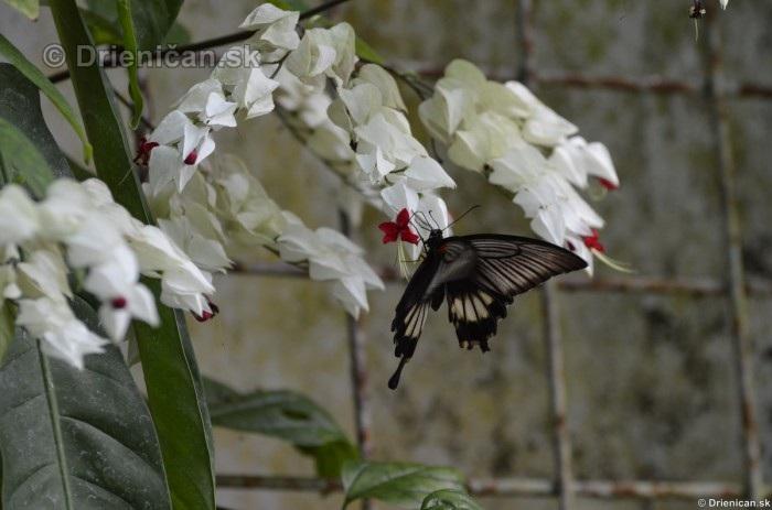 Tropicke motyle v botanickej zahrade Kosice_28