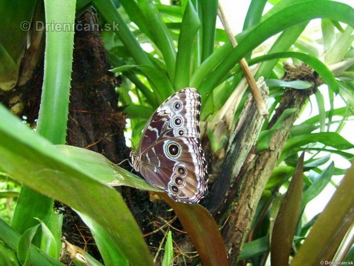 Tropicke motyle v botanickej zahrade Kosice_31