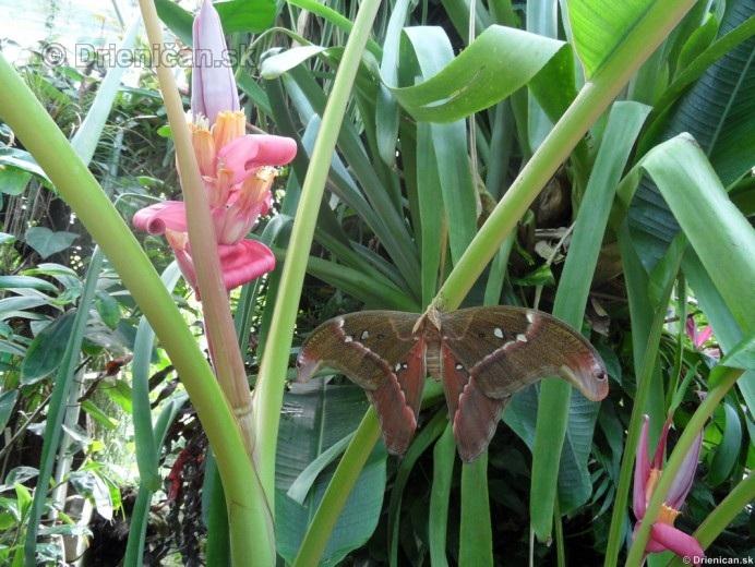 Tropicke motyle v botanickej zahrade Kosice_37