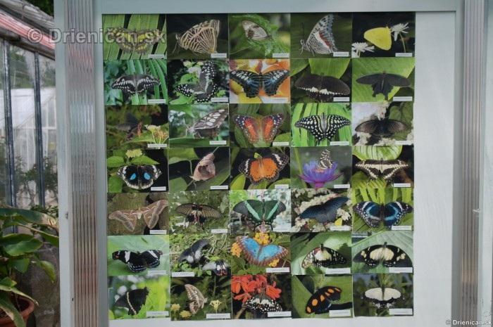 Tropicke motyle v botanickej zahrade Kosice_38
