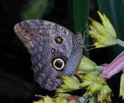 Tropické motýle v botanickej záhrade Košice