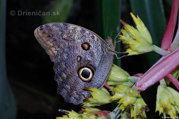 Tropicke motyle v botanickej zahrade Kosice_39